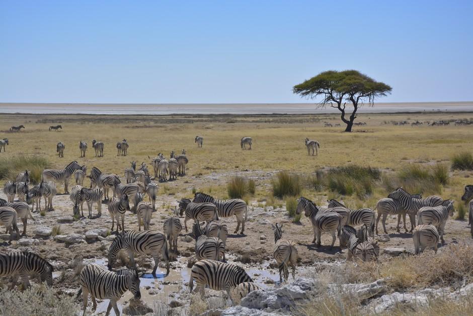 Parc Etosha en Namibie